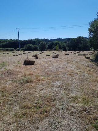 Se venden alpacas de hierba seca