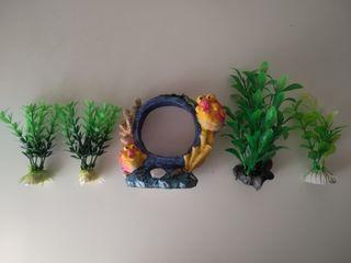plantas y decoración acuario