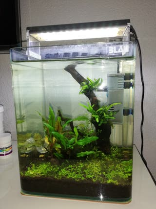 acuario blau 10l