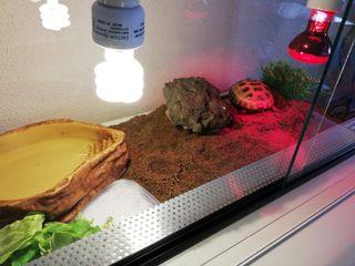 TERRARIO para tortugas o reptiles.