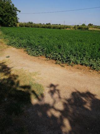Alfalfa paca pequeña.