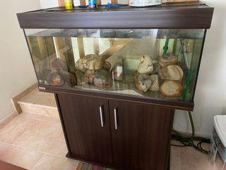Acuario Eheim 180 litros con mueble