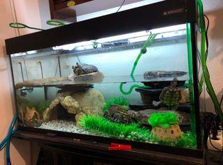 Aquario 250 Litros (Pecera)