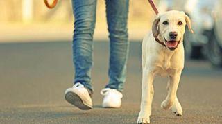paseo tu perro por 7€ = 1 h