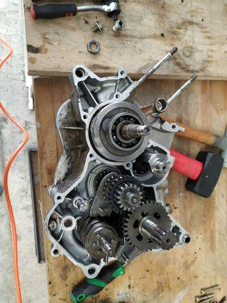 motor am6 rotor polini