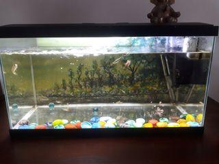 pecera, incluye peces y limpiador cristal