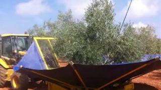 Paraguas recolector Noli