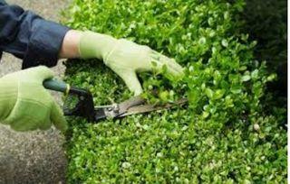 jardinería económica