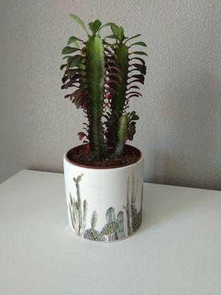 Maceta con planta natural.
