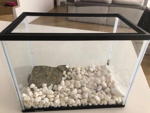 Pecera/tortuguera