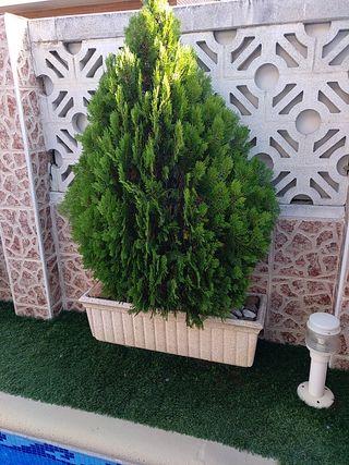 Se venden plantas, con banco de regalo.
