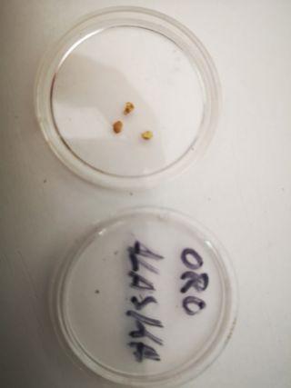 Oro 3 piezas pequeñas de oro de Alaska