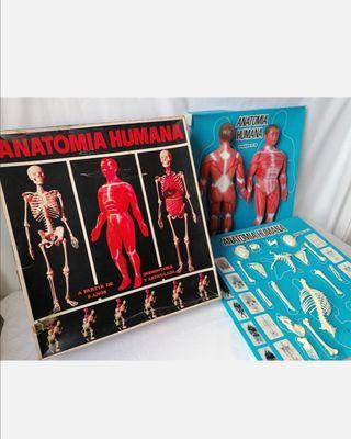 Juguete Anatomía Humana