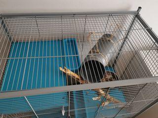 jaula roedor pequeño