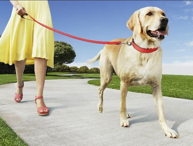 Me ofrezco a pasear perros
