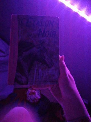 livre étalons noir