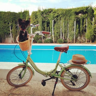 Bicicleta Plegable Vintage DAFATCAT