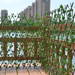 valla de jardín ---celosia---