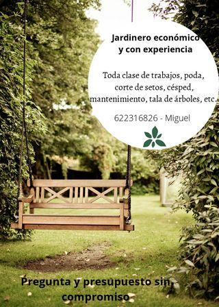 jardinero economico con experiencia