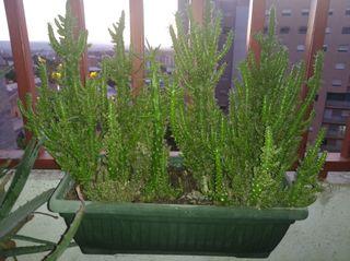 Jardinera de cactus