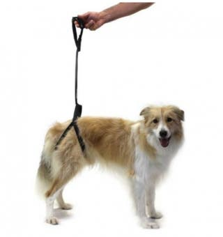 Arnés de soporte perros