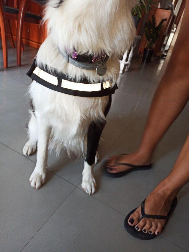 Arnés perro 70-86 cm