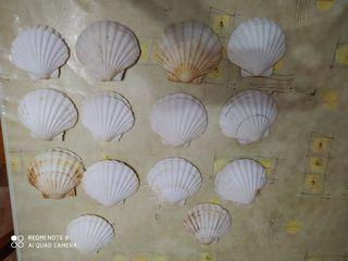 almejas del mar