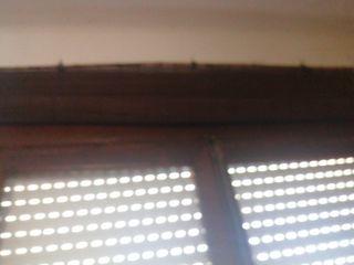 estor bambú