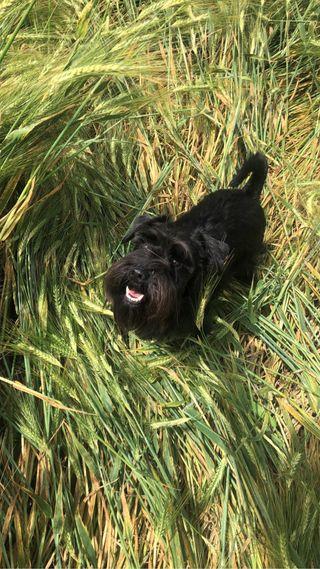 Paseadora de Perros en T. de la Calzada