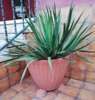 Maceta de piedra con palmera