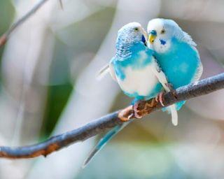Cuido a tus pájaros