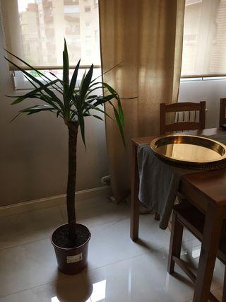 Planta| Maceta Ikea + 2 Maceteros