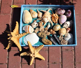 Colección de conchas, fósiles