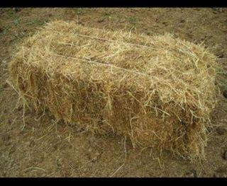 se venden fardos de alfalfa, de 4 y 6 cuerdas