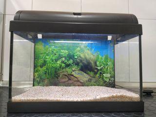 acuario+luz+filtro+calentador+fondo+grava