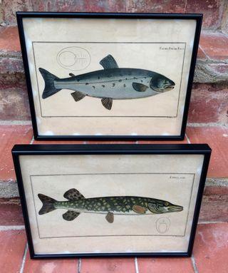 set 2 Cuadros itiologia grabados pescados