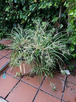 plantas de jardín con macetas