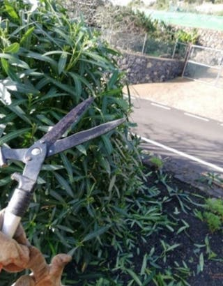 jardinero económico