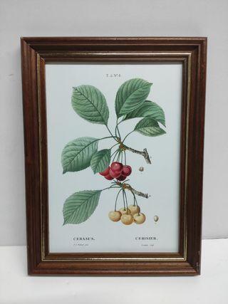 cuadro botánico marco Vintage