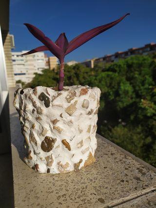 maceta con planta tradescantia