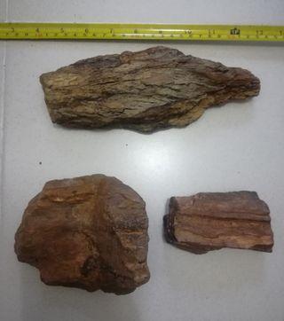 3 maderas fósiles (xilópalos)