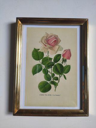 cuadro Pequeño rosas