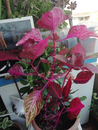 planta grande con maceta muy grande