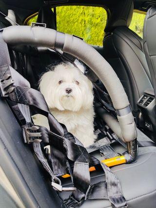 Transportín perro. Dispositivo de retención