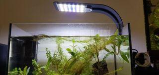 Lámpara/Pantalla/Luz led para acuario/gambario