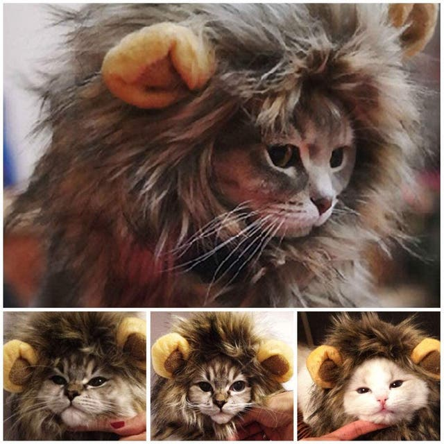 Melena de león para gato y perro.