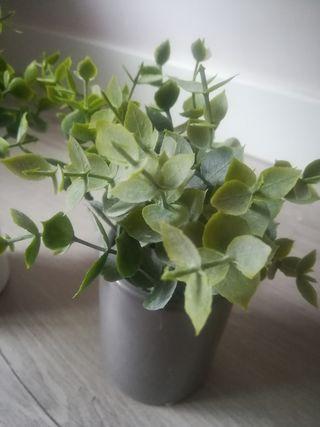 planta eucalyptus artificial