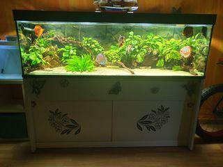 acuario de 640 litros