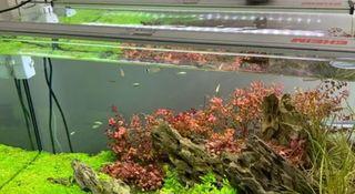 Pantalla led acuario EHEIM