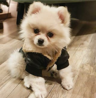 chaqueta polipiel perro negro